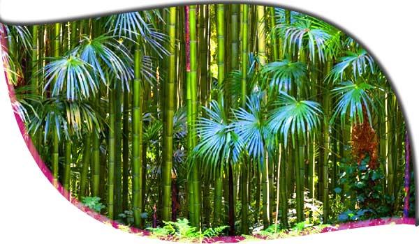 Bambouseraie, d'Anduze