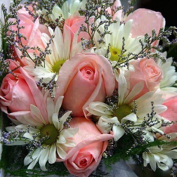 Roses rose de Catherine S